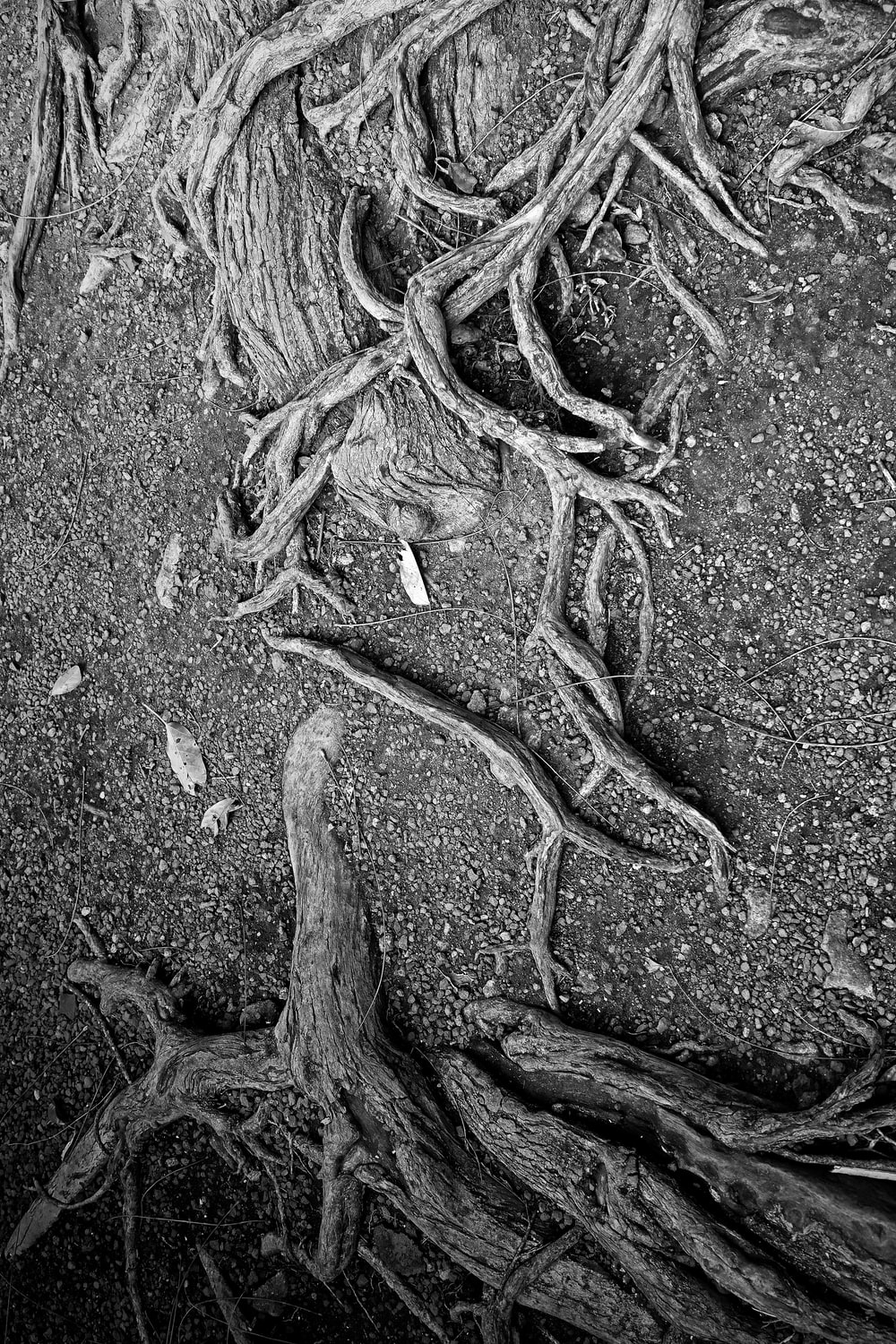 grayscale photo of a rope on a concrete floor