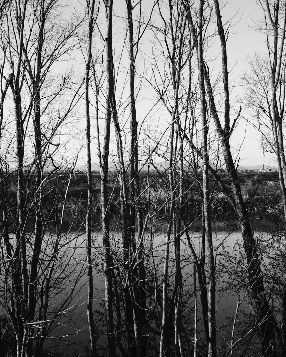 grayscale photo of bare trees on body of water