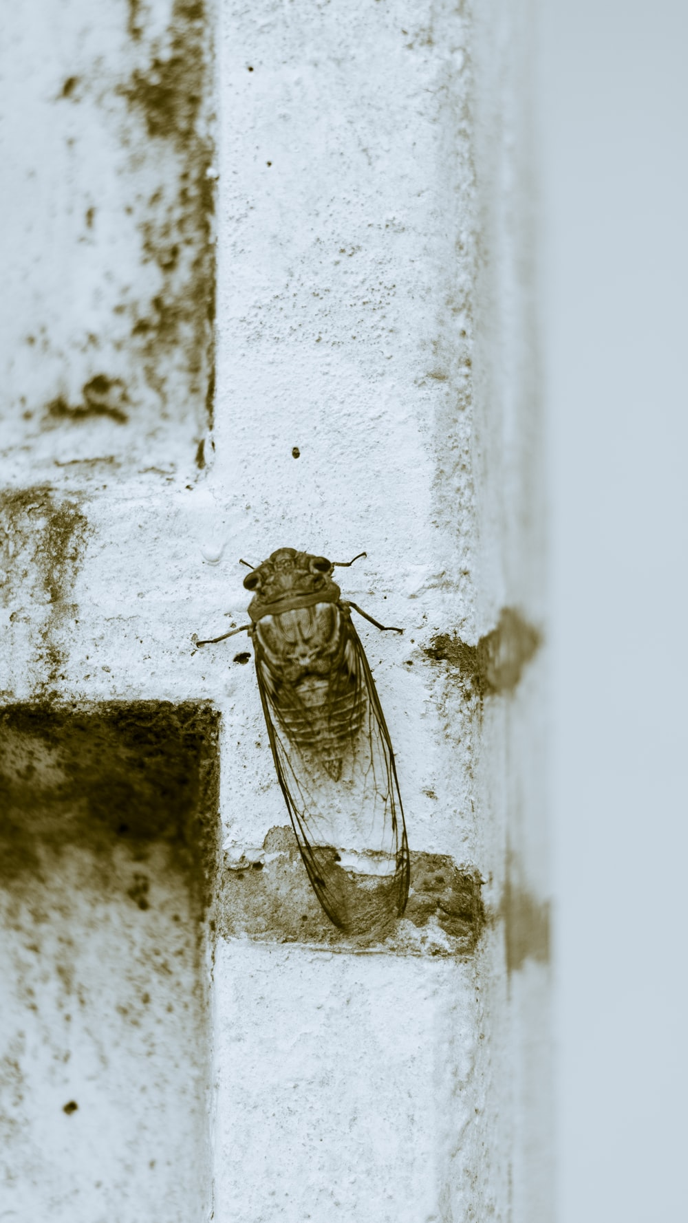 brown and black insect on white concrete wall