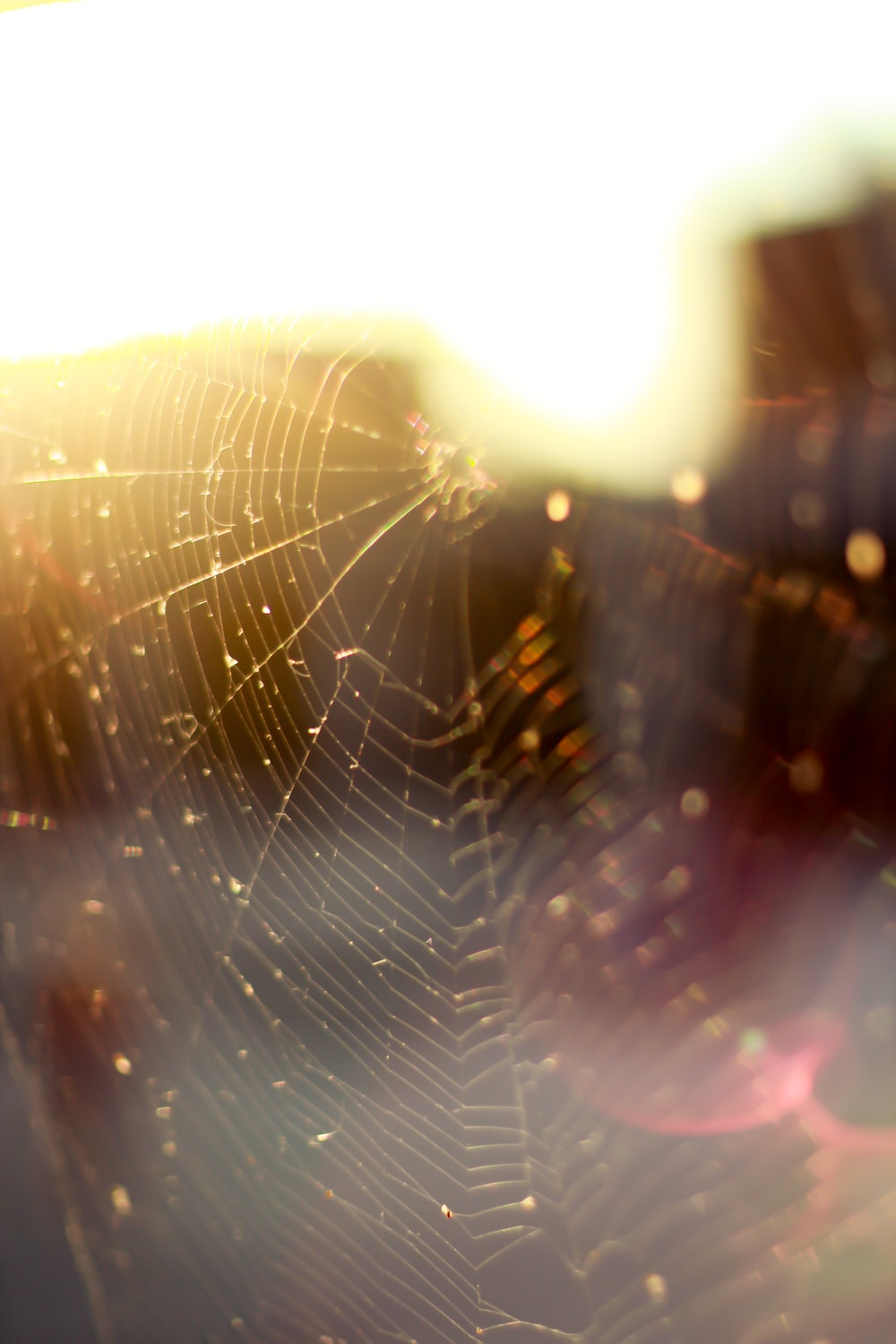 water droplets on spider web in close up photography during daytime