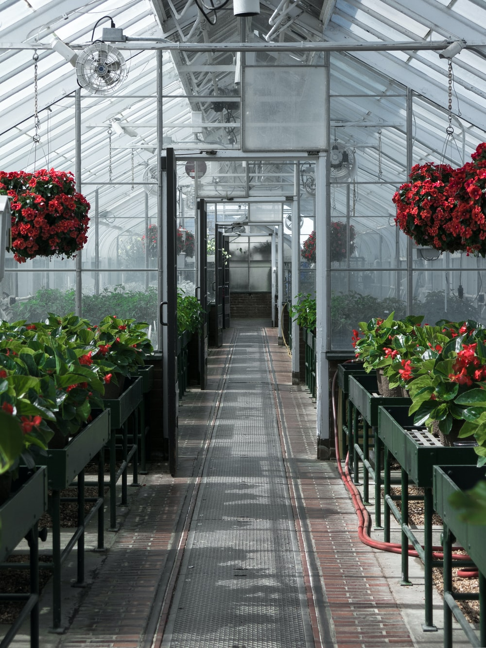 red flowers in green plants