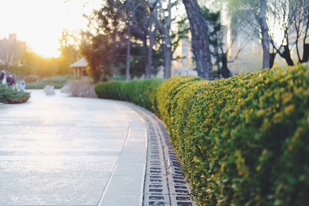 green plants beside gray concrete road during daytime