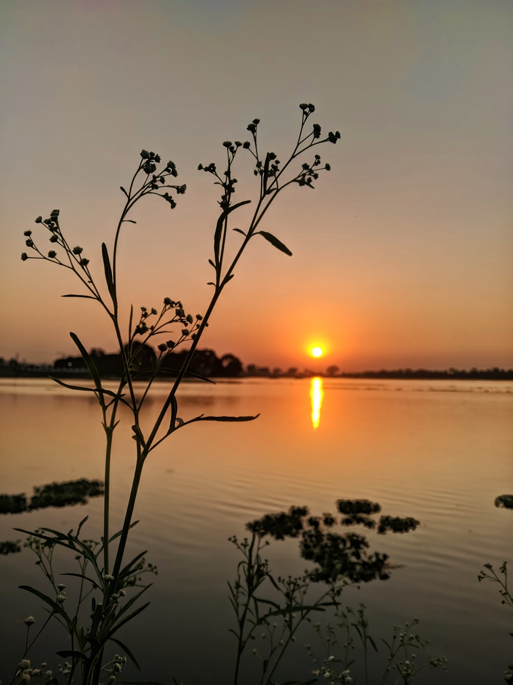 silhouette of plant on water during sunset