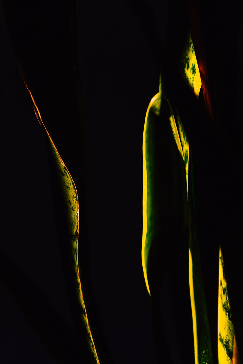 yellow and green abstract painting