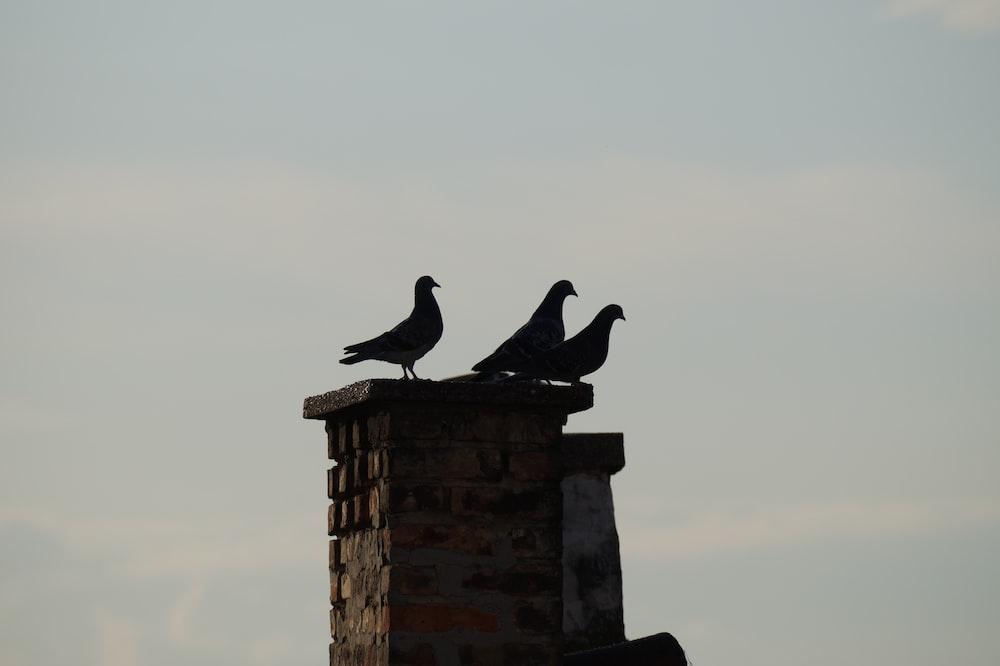 black bird on black concrete post during daytime