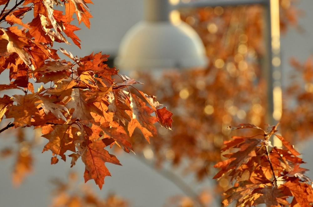white ceramic jar on brown leaves during daytime