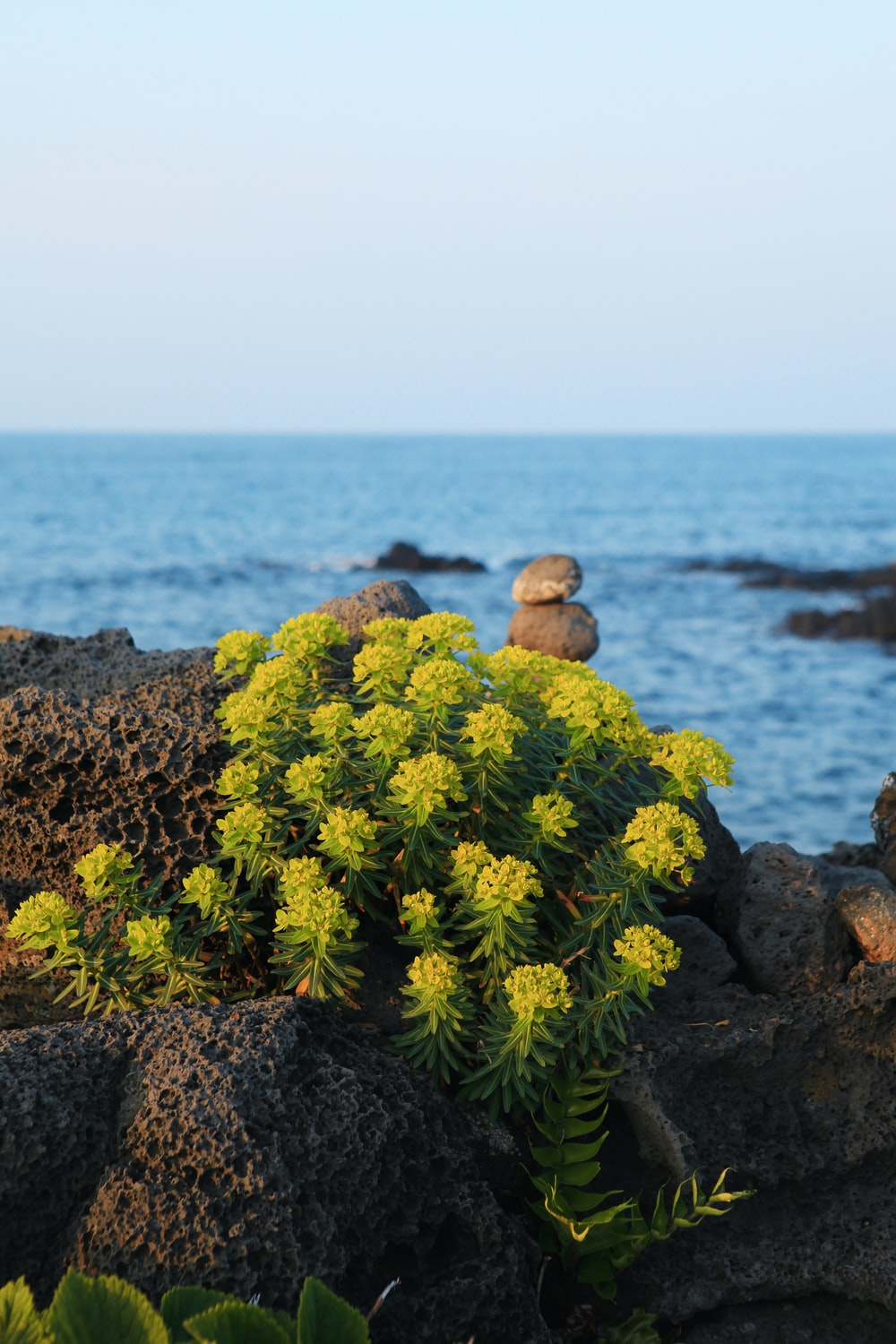 green plant on gray rock near body of water during daytime