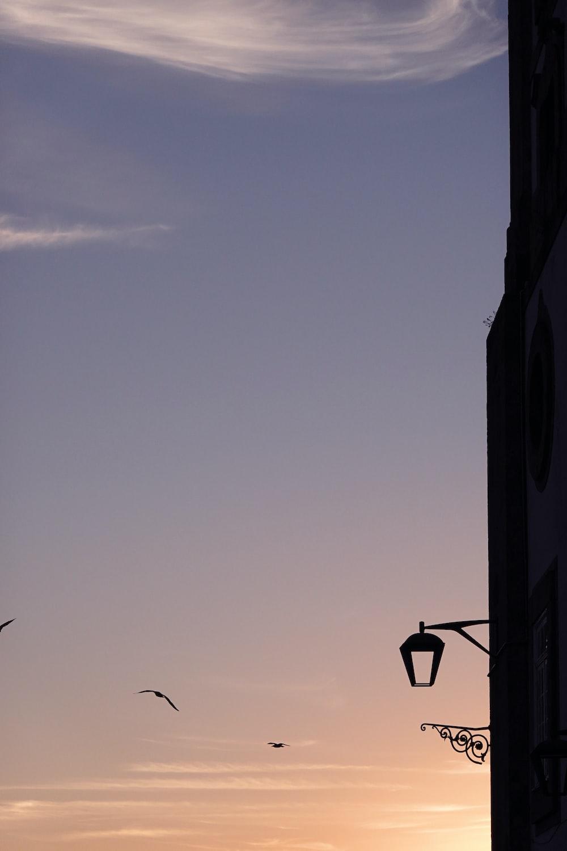 silhouette of street light during daytime