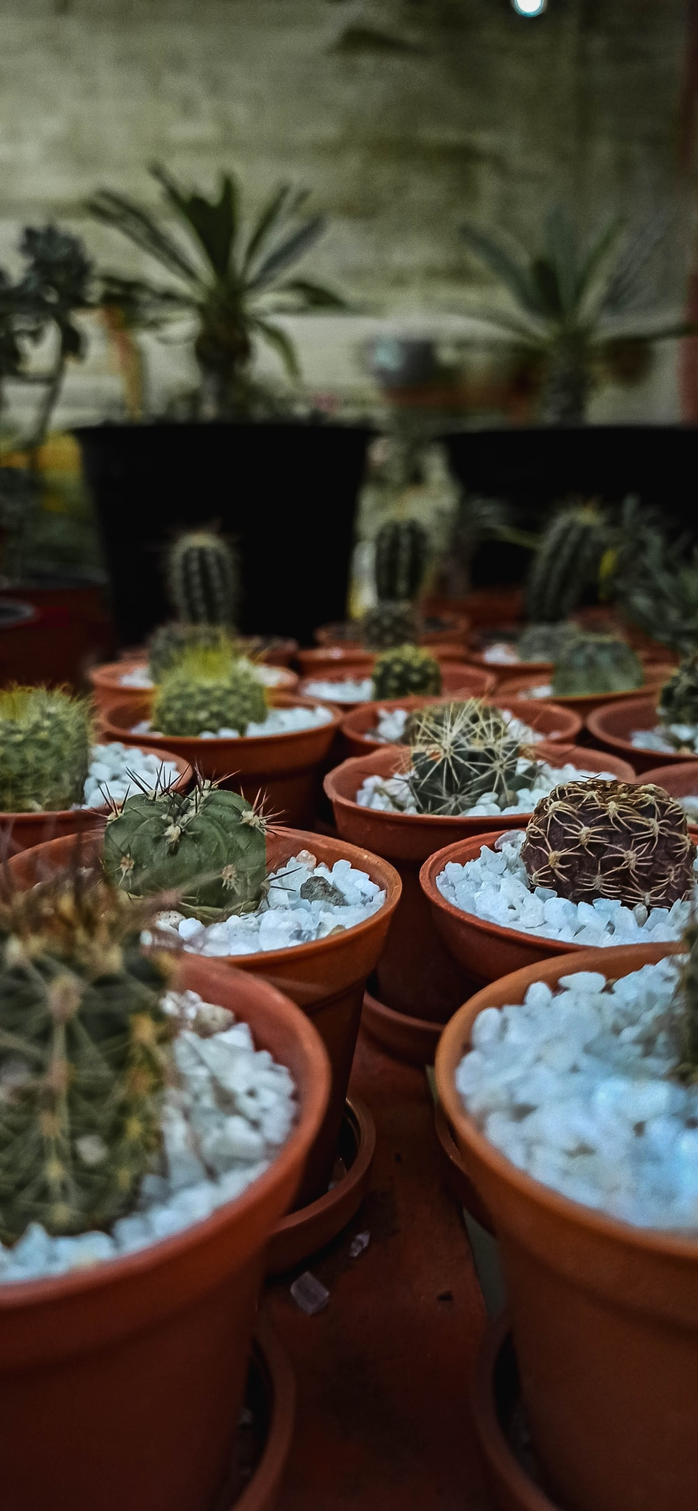 green cactus plants on brown clay pots