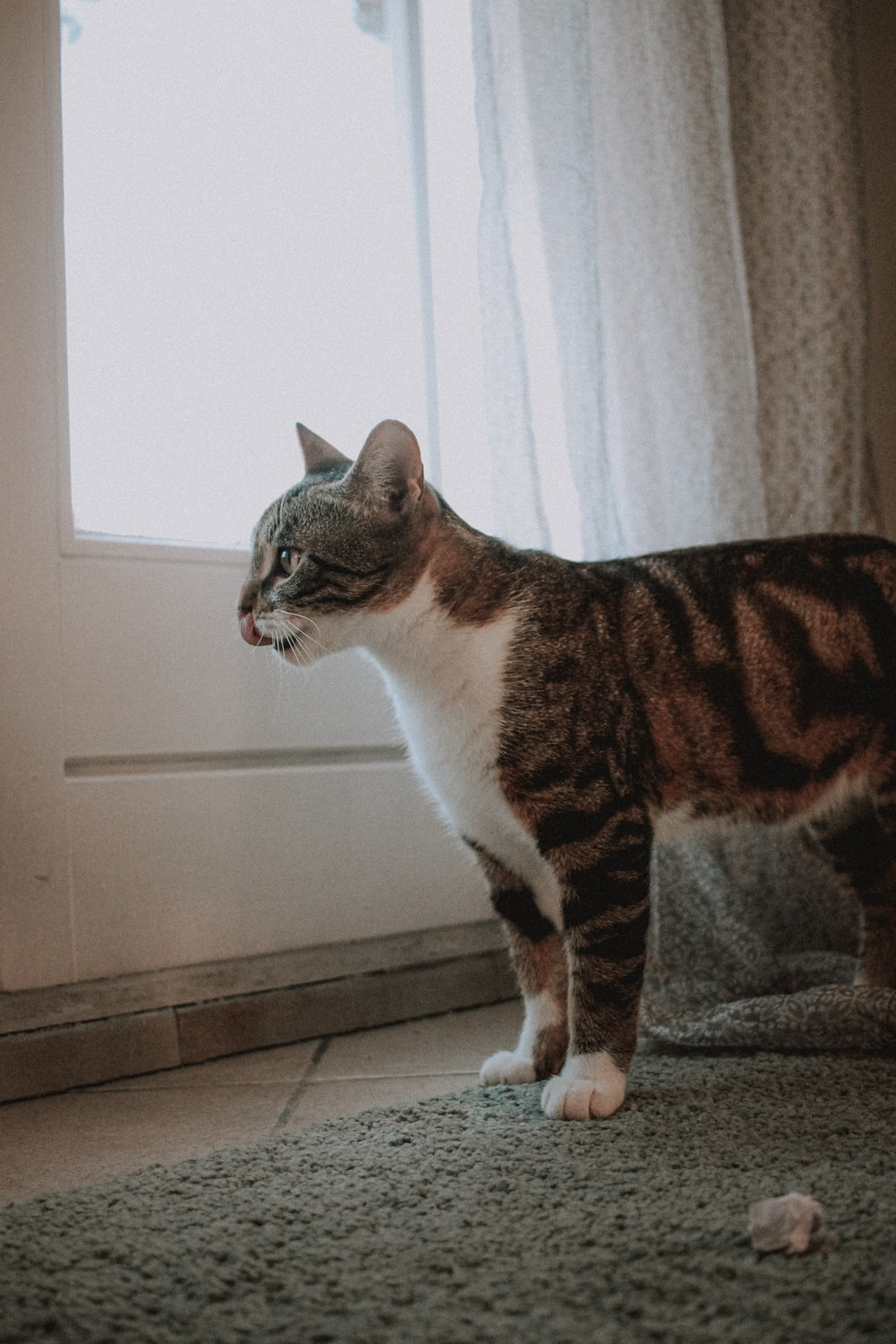 brown and white tabby cat on gray textile