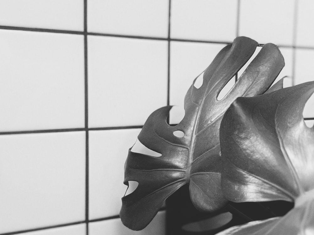 grayscale photo of leaves on white tiles