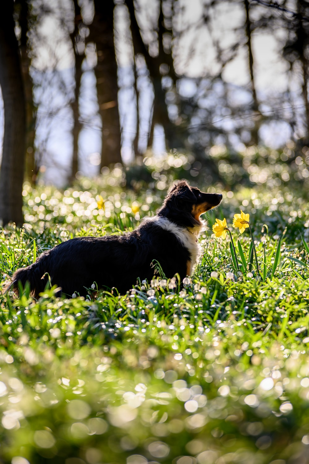 black white and brown short coated dog on green grass field during daytime
