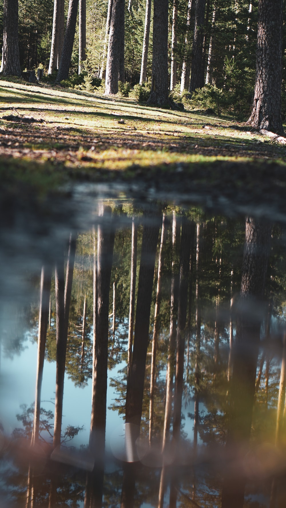 brown wooden fence on green grass near body of water during daytime
