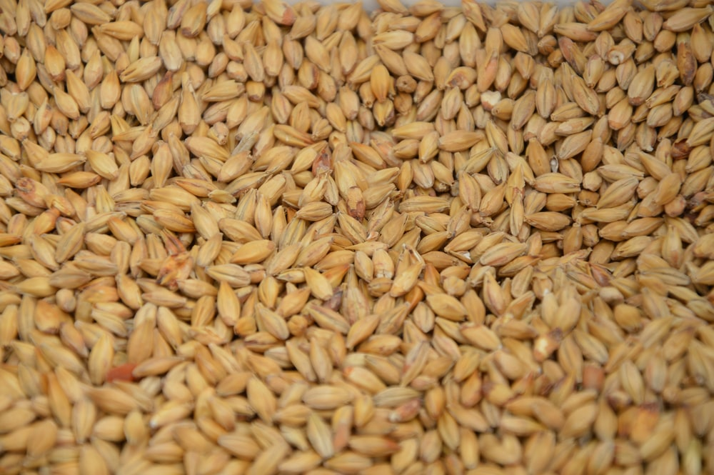 brown and white rice grains