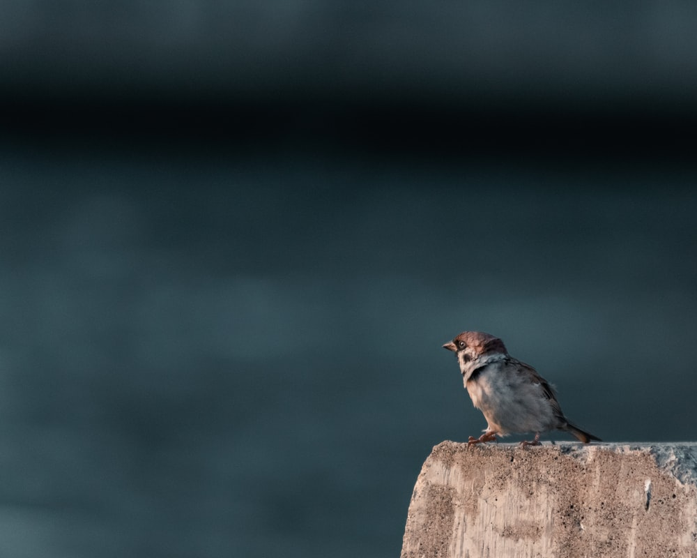 brown and gray bird on brown wooden post