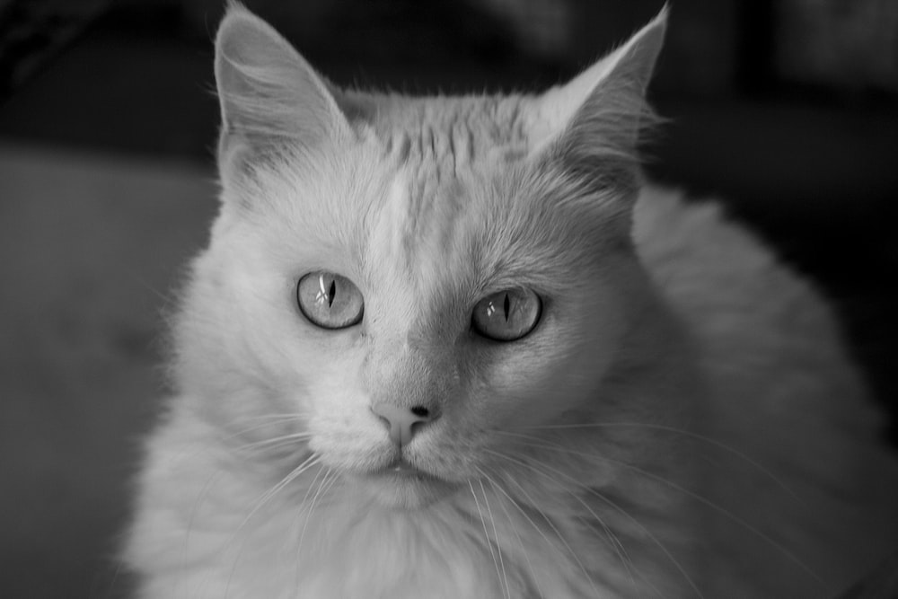 grayscale photo of cat with yellow eyes