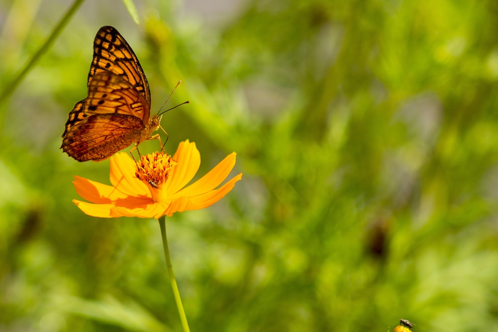brown and black butterfly on yellow flower during daytime