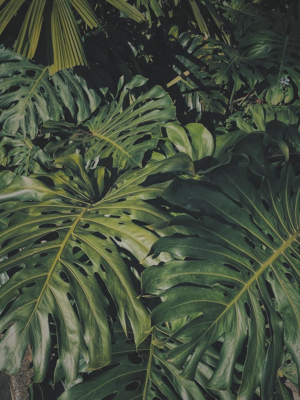 green banana tree during daytime