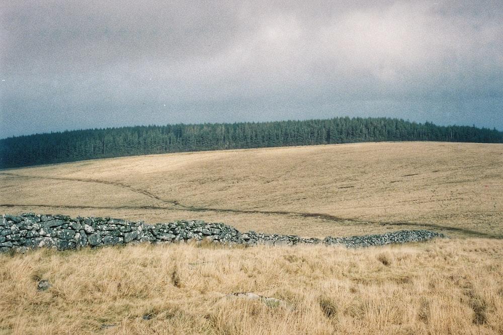 brown grass field under gray sky