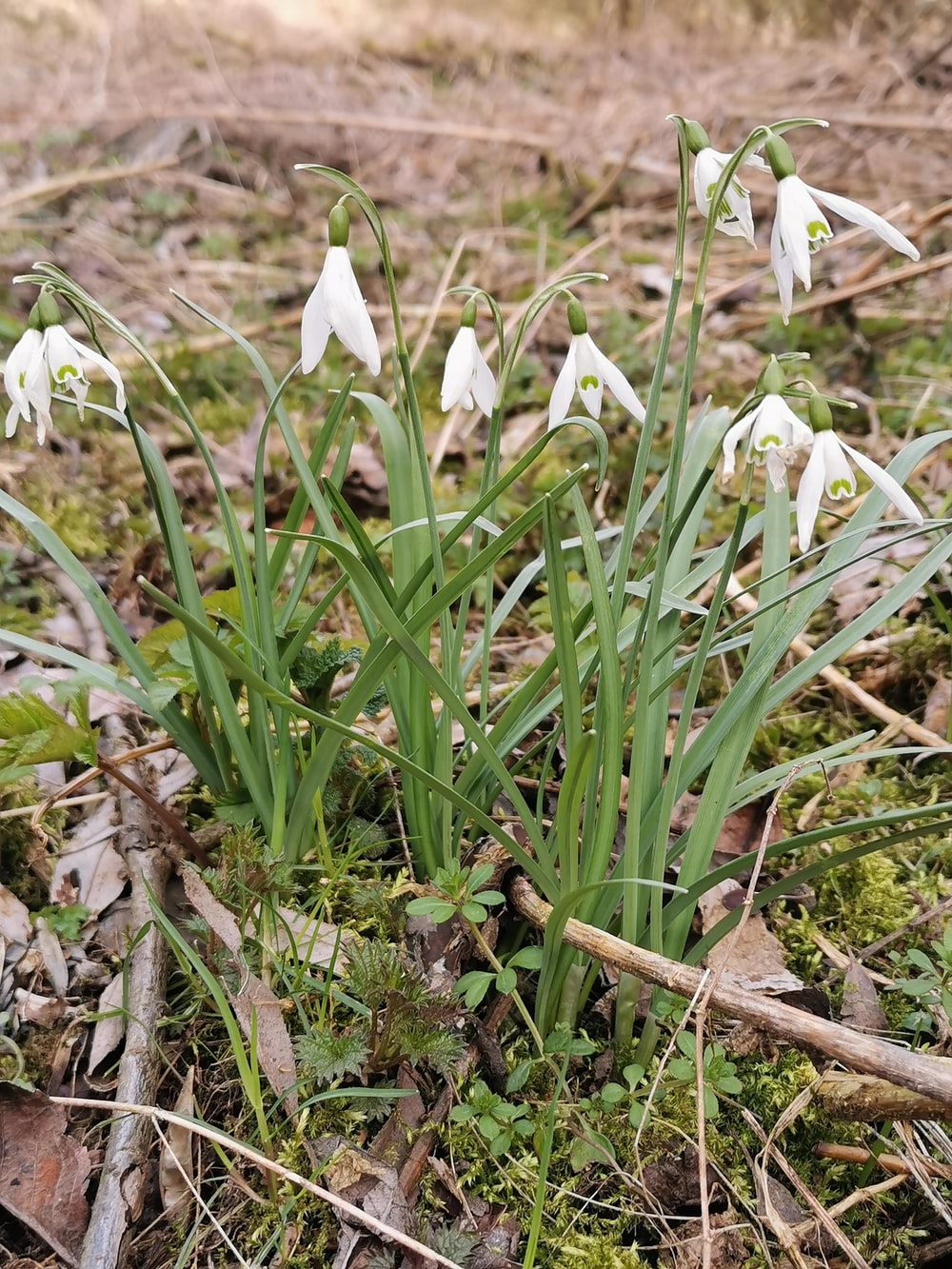 white flowers on brown grass
