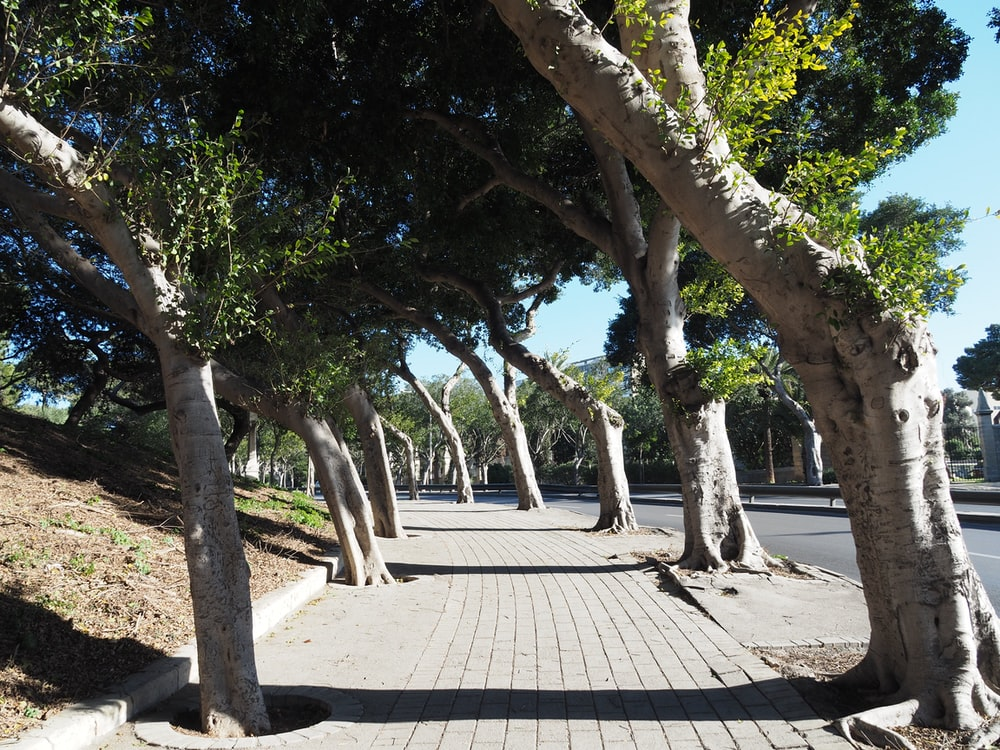 green trees on park during daytime