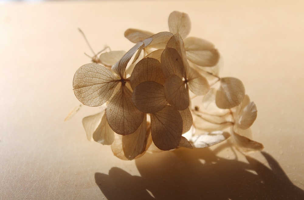 brown and white moth orchids in close up photography