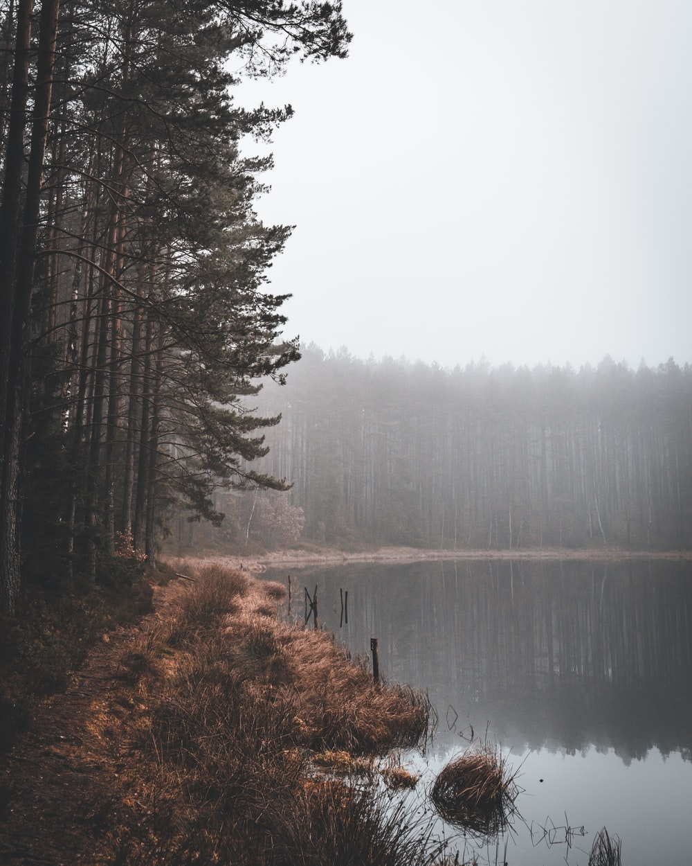green trees beside lake during foggy weather