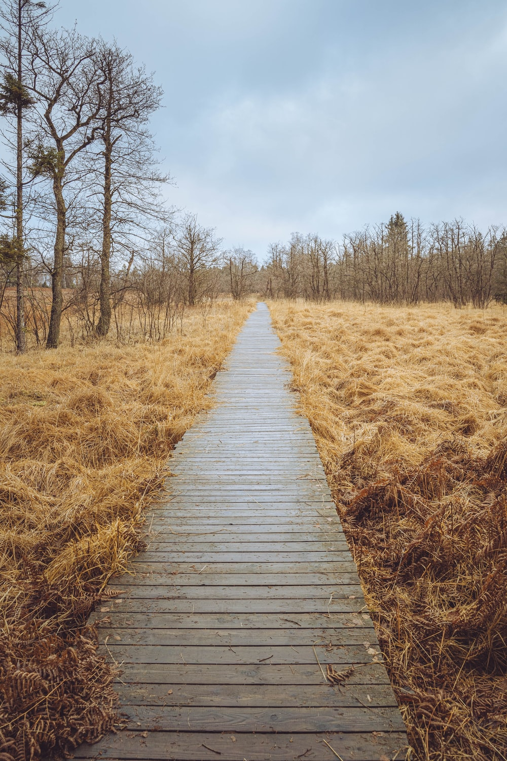 brown wooden pathway between brown grass field during daytime