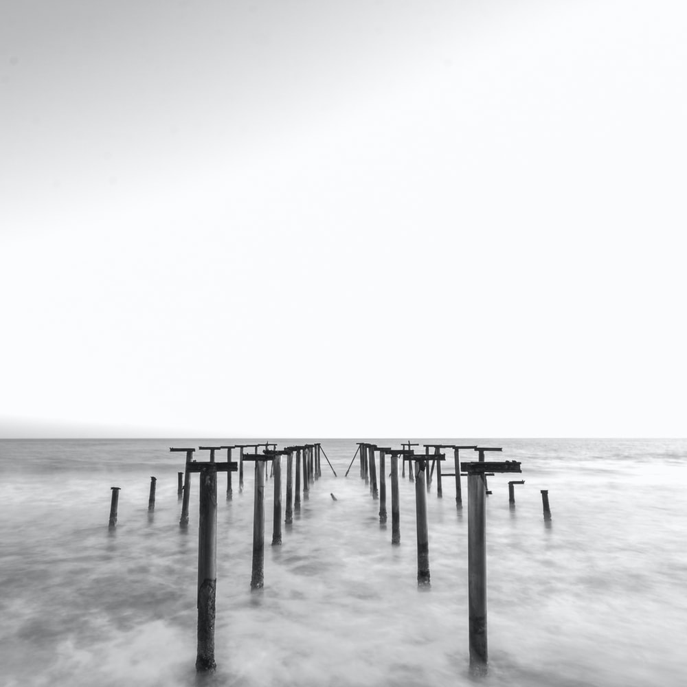 grayscale photo of wooden posts on sea