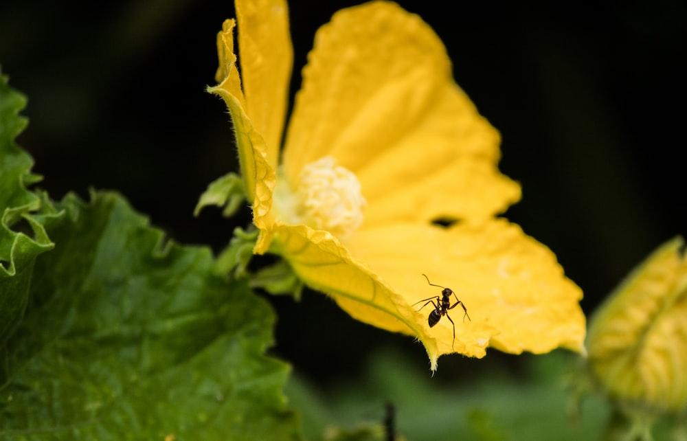 black ant on yellow flower