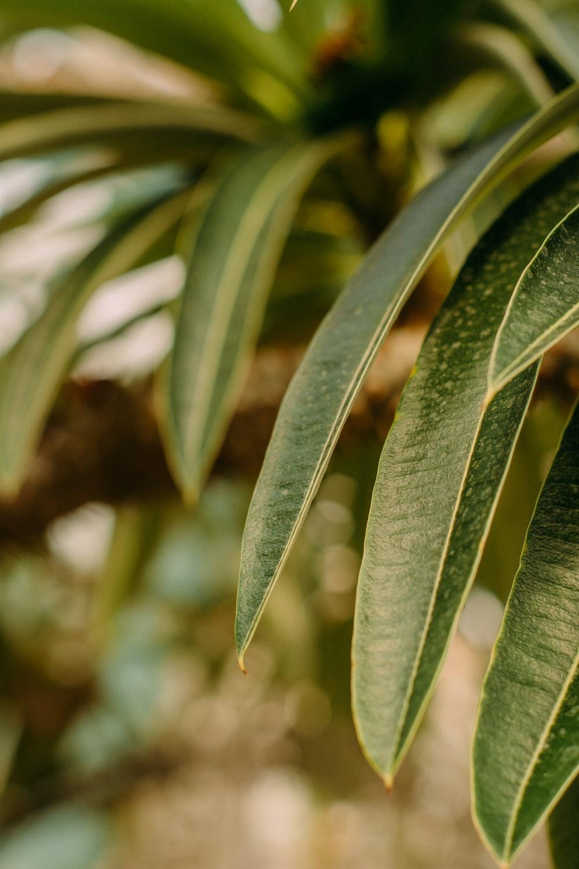 green leaves in macro lens