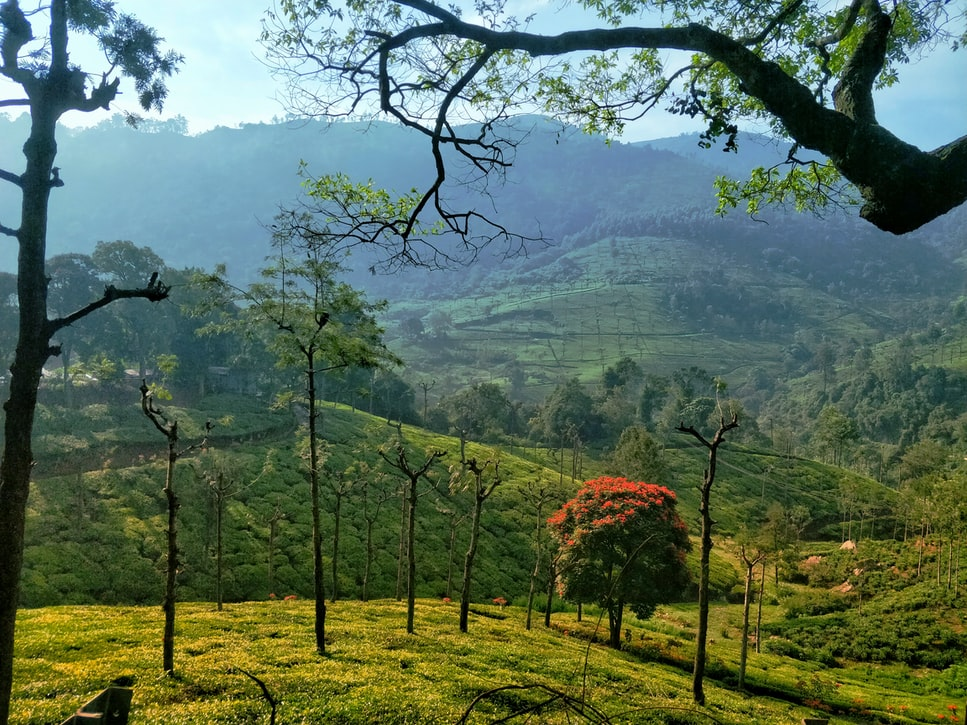 The hills of Ooty: Resorts In Ooty With Swimming Pool
