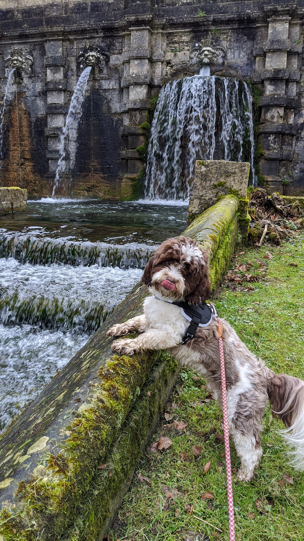 brown and white long coated dog on green moss covered tree trunk