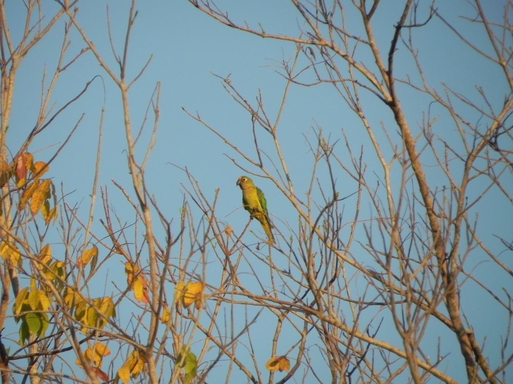 green bird on brown tree branch during daytime