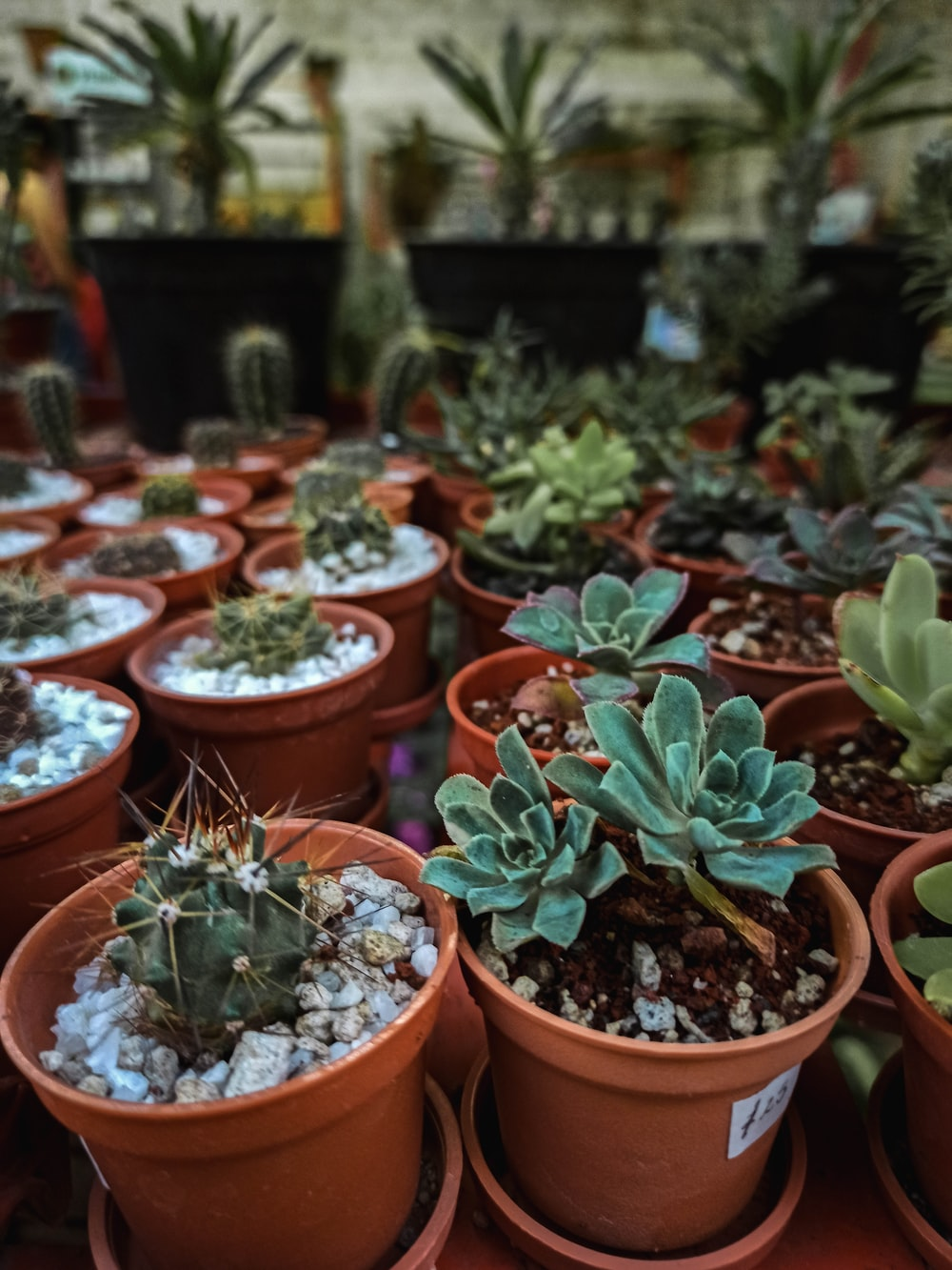 green succulent plants in brown clay pots