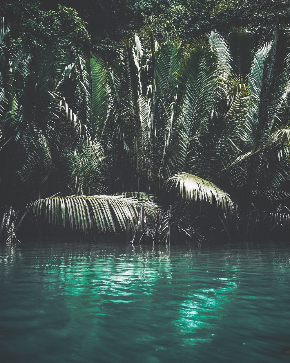 green palm tree on water