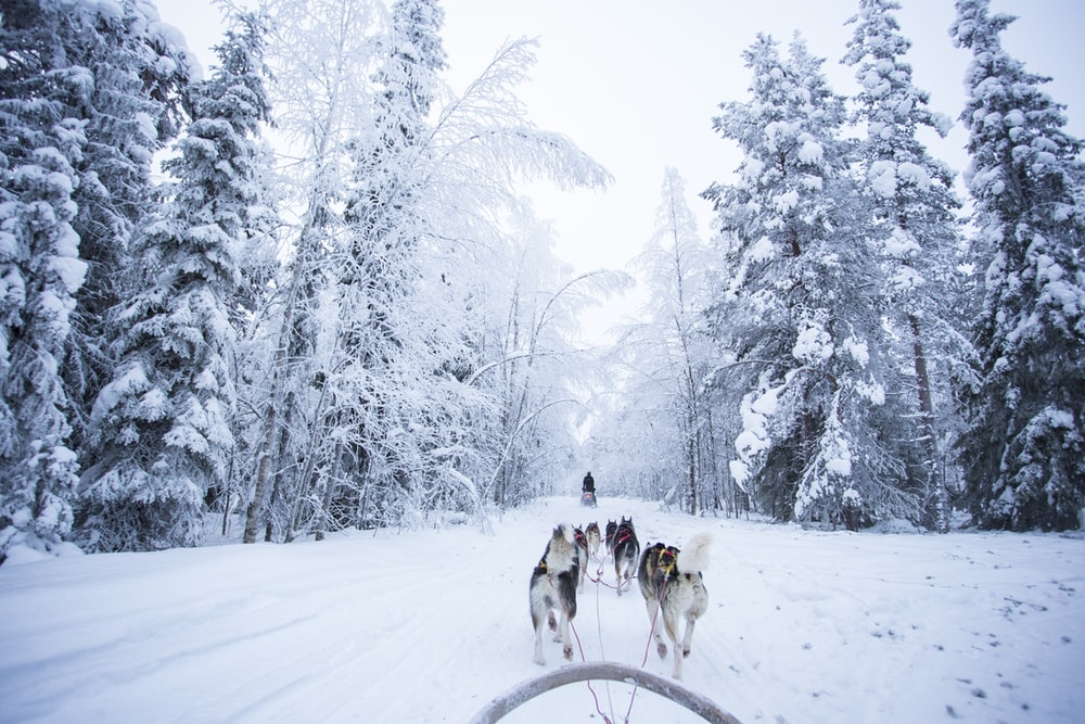 people riding on snow sled on snow covered ground during daytime
