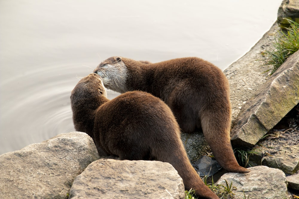 brown seal on gray rock during daytime