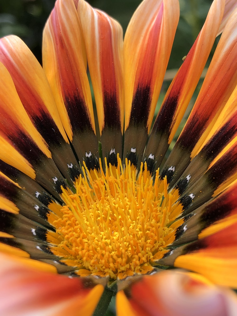 yellow and red flower in macro lens photography