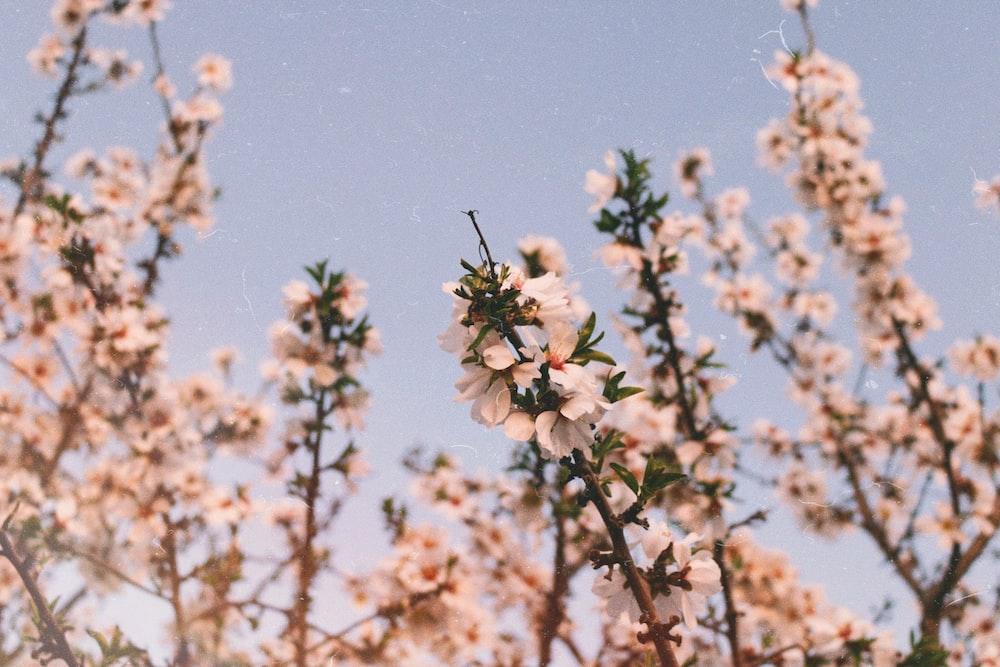 white flower under blue sky during daytime