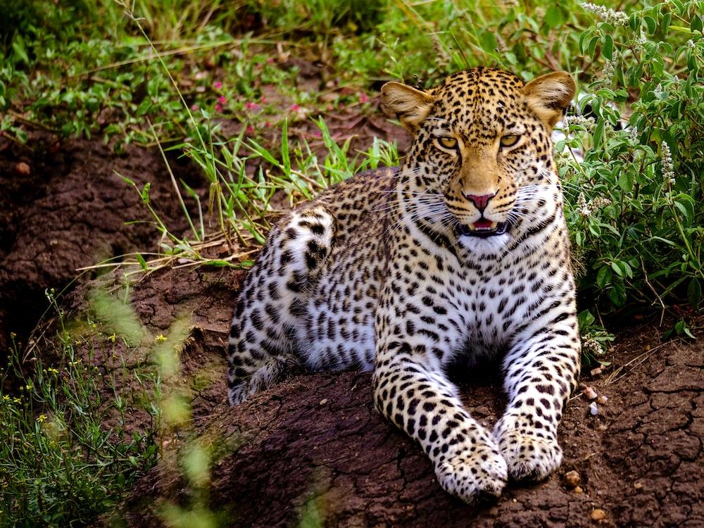 leopard on brown tree trunk