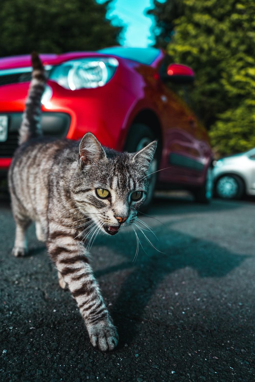 silver tabby cat on gray asphalt road