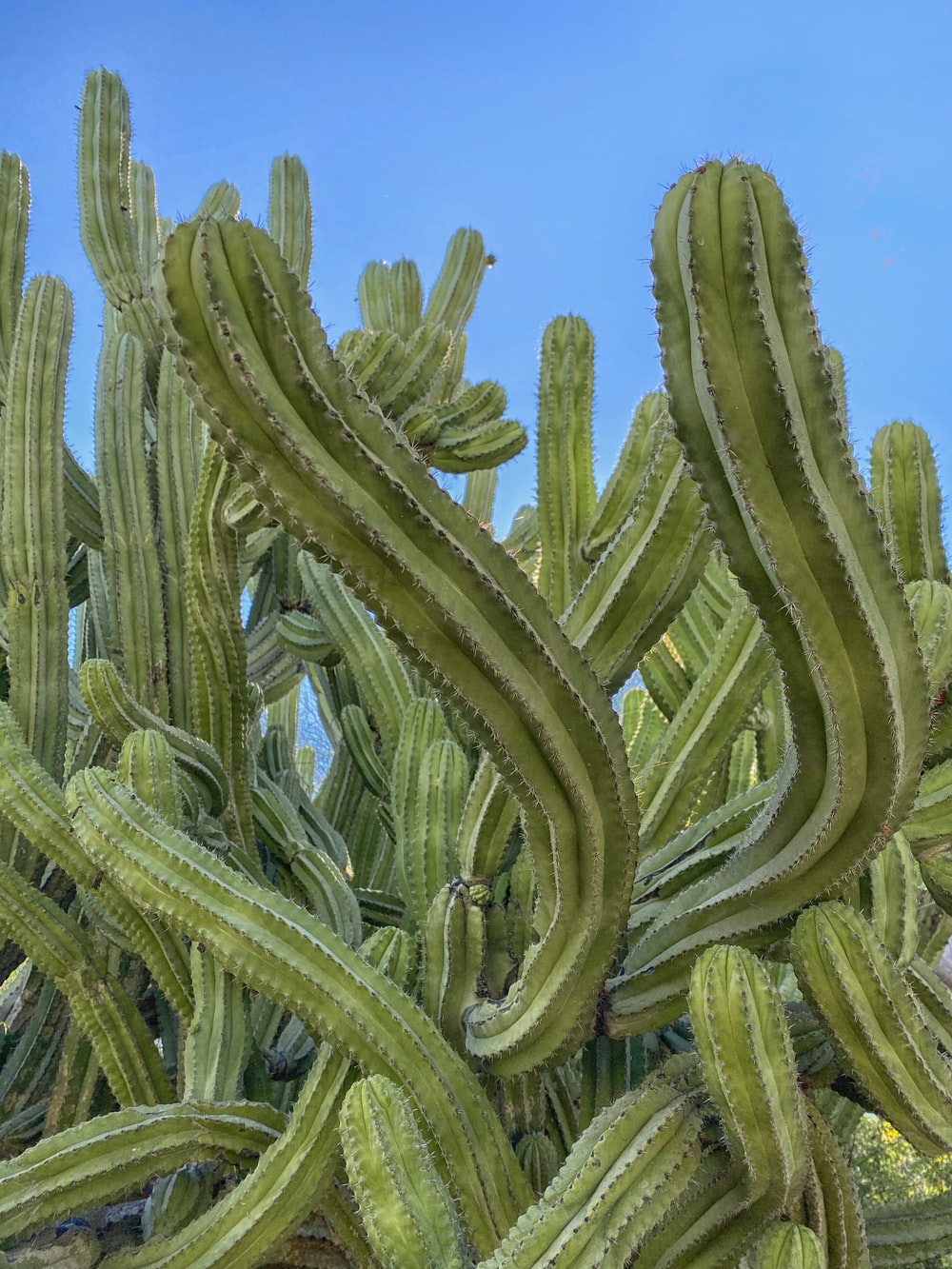 green cactus under blue sky during daytime