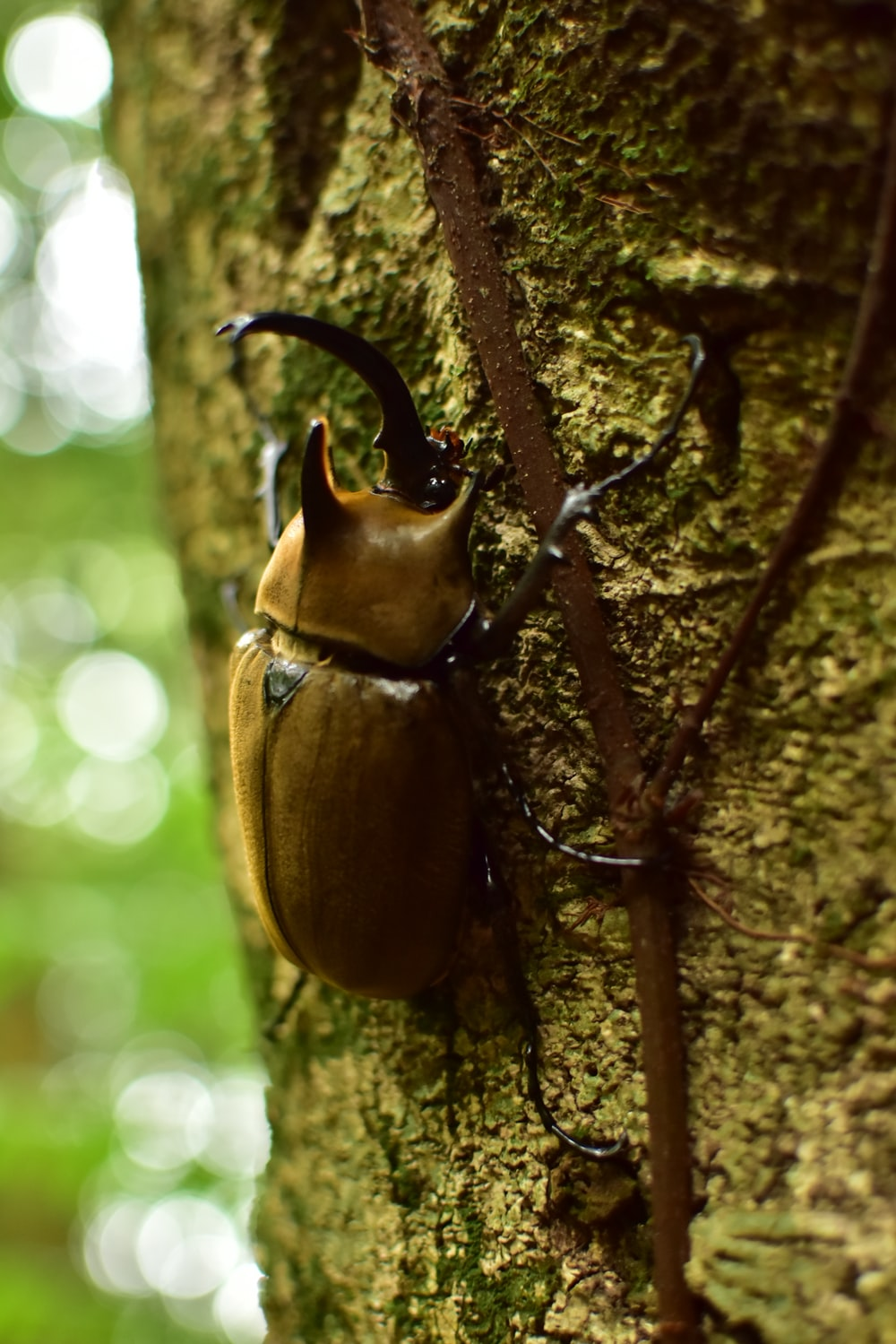 brown and black beetle on brown tree branch during daytime