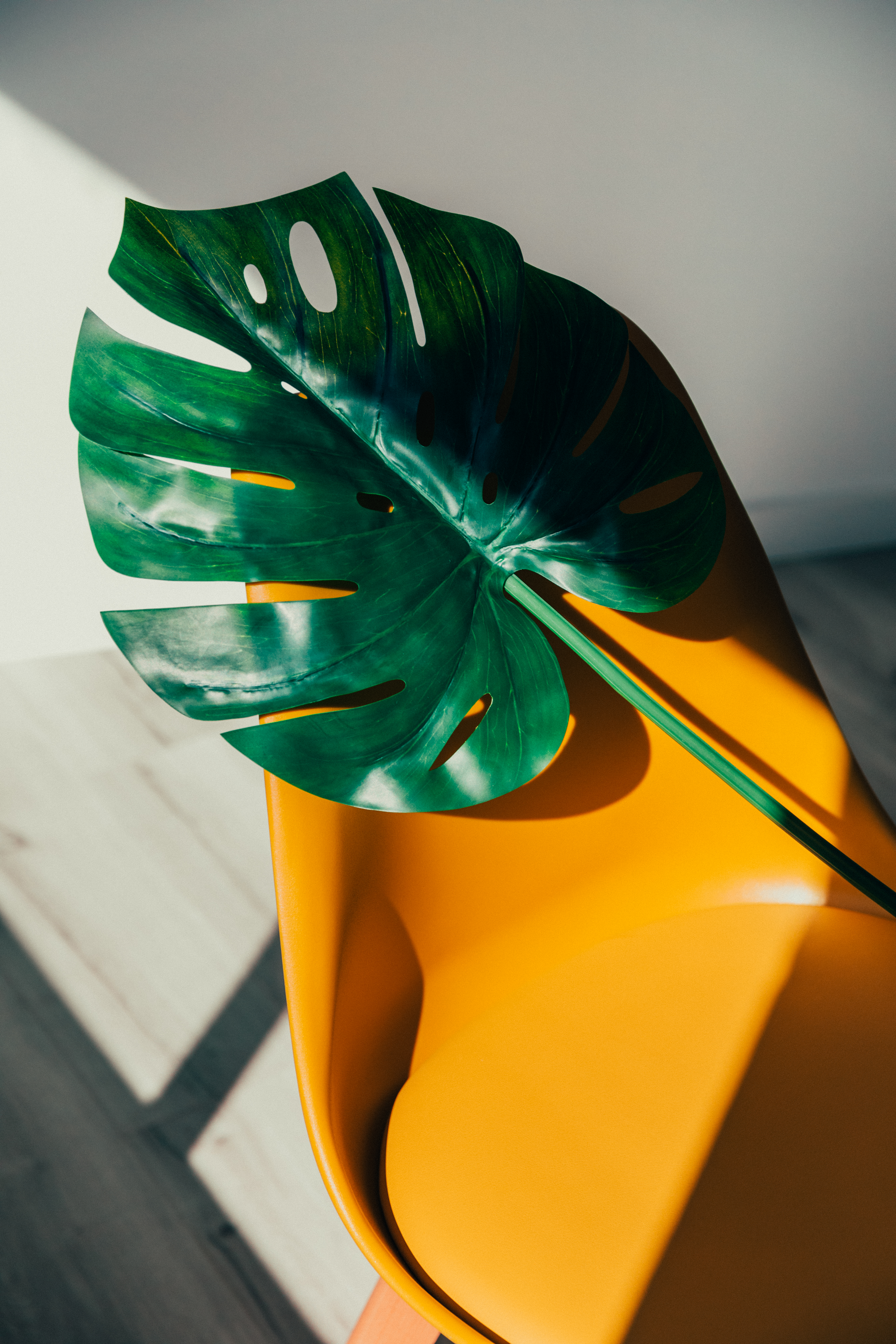Green swiss cheese plant plant on top of a yellow chair