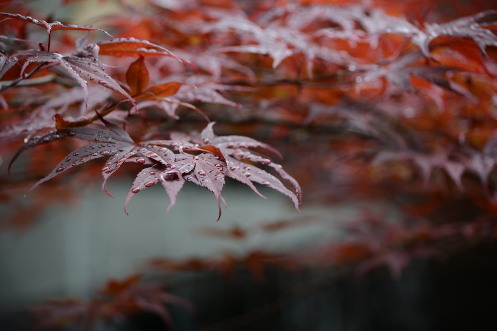 orange and white plant in close up photography