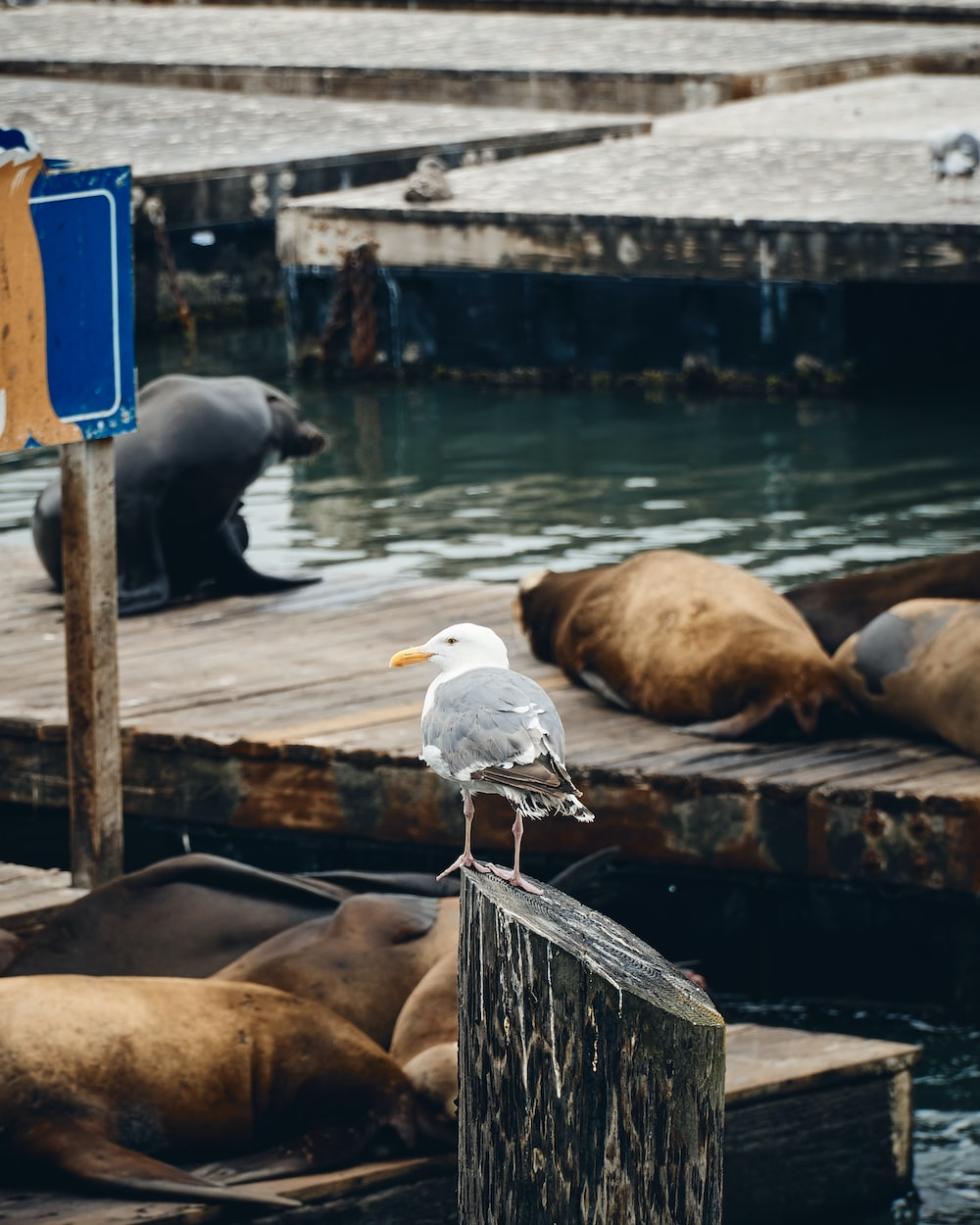 white bird on brown wooden dock during daytime
