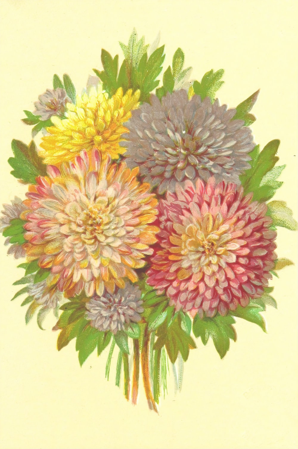 yellow and pink flower illustration