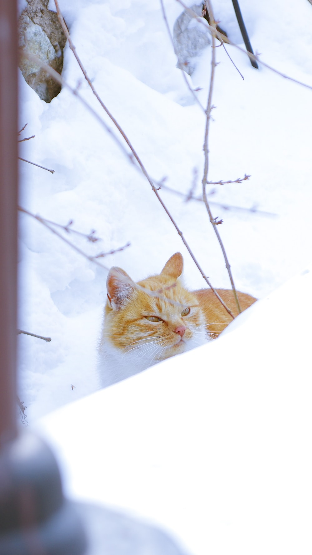 orange tabby cat on snow covered ground during daytime