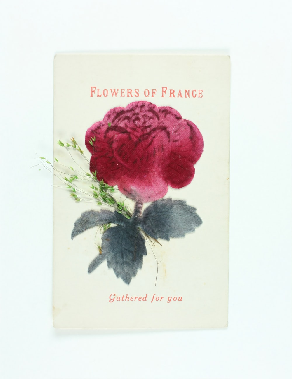 red rose with happy mothers day greeting card
